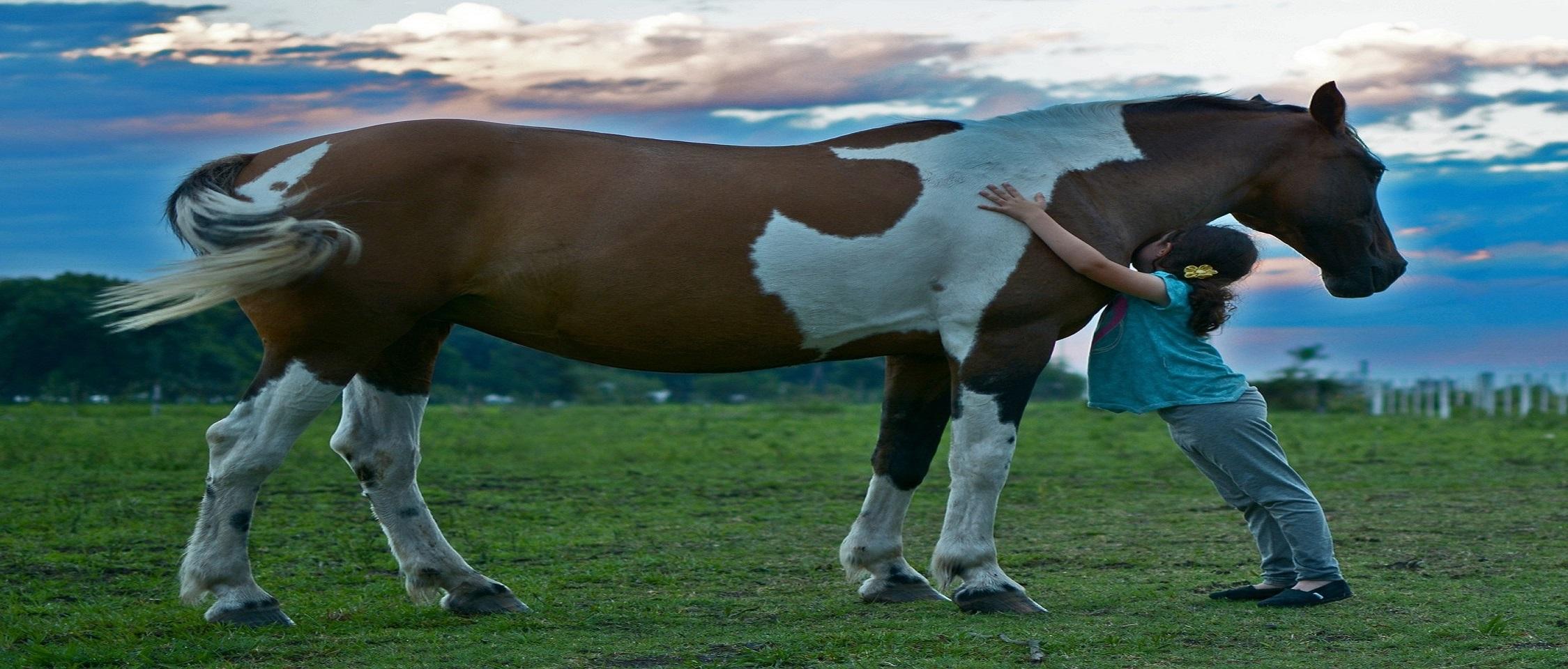 horse-2536537_1920